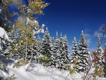 Snöig Oktober dag Fotografering för Bildbyråer