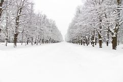 snöig park Royaltyfria Bilder