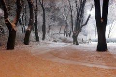 snöig park Royaltyfri Foto
