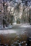 snöig park Royaltyfria Foton