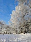 Snöig parkera djupfryst treesbakgrund Royaltyfria Foton