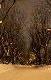 Snöig parkera gränden under natten Royaltyfri Foto