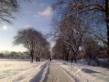 Snöig parkera på en vinterdag royaltyfria bilder