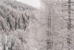 Snöig sörja royaltyfri bild