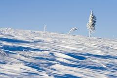 Snöig sörja alone på kullen Royaltyfri Foto