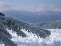 Snöig sörja filialen mot bakgrunden av bergen Royaltyfri Fotografi