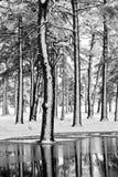 Snöig sörja skogen i vinter Arkivfoto