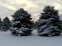 Snöig sörja träd Arkivfoto