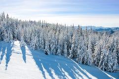 Snöig sörja träd på ett vinterlandskap Royaltyfri Bild