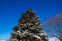 Snöig sörja trädet Fotografering för Bildbyråer