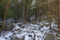 Snöig skogäng i Yosemite Arkivfoton