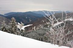 snöig skog 2 royaltyfri fotografi