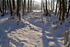 Snöig skog. Arkivbild