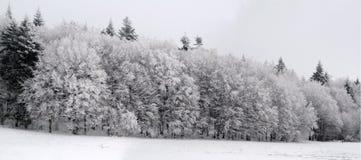 snöig skog arkivfoton