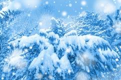 Snöig skog Fotografering för Bildbyråer