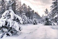 Snöig skog Arkivbilder