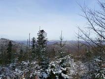 Snöig skog Royaltyfri Fotografi