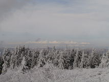 Snöig skog Royaltyfri Foto