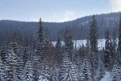 Snöig skog Royaltyfria Bilder