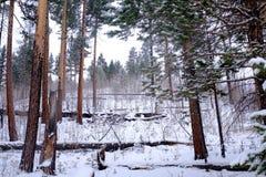 Snöig skog arkivbild