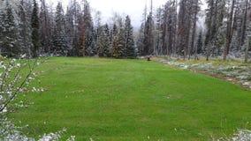Snöig skog för grön äng arkivfoto