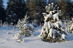 Snöig skog för härlig landskapvinter arkivfoto