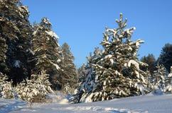 Snöig skog för härlig landskapvinter royaltyfria bilder