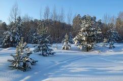 Snöig skog för landskapvinter arkivfoto