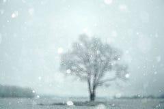 Snöig skog för suddig bakgrund Royaltyfria Foton