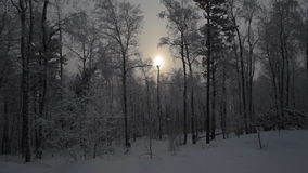 Snöig skog för vinter arkivfilmer