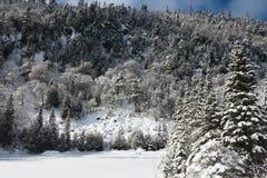 Snöig skog för vinter Royaltyfri Foto