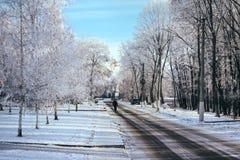 Snöig skog för vinter Fotografering för Bildbyråer