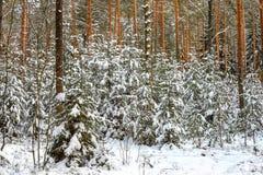 Snöig skog för vinter Arkivfoton