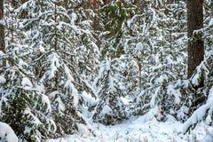 Snöig skog för vinter Arkivbilder