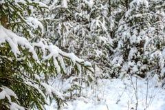 Snöig skog för vinter Royaltyfri Fotografi