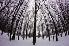 Snöig skog för vinter Royaltyfria Bilder
