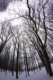 Snöig skog för vinter Royaltyfria Foton