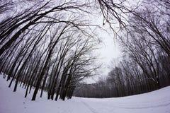 Snöig skog för vinter Arkivfoto