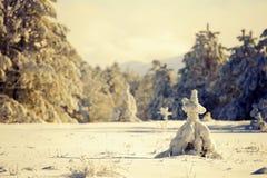 Snöig skog i det härliga solljuset fotografering för bildbyråer