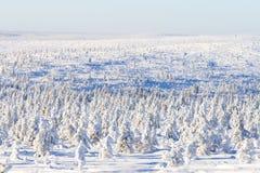 Snöig skog i solsken Arkivbilder