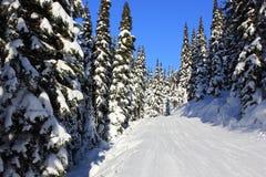 Snöig skog i vinter på en solig dag royaltyfri fotografi