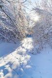 Snöig skog i vintertiden Fotografering för Bildbyråer