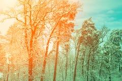 Snöig skog på soluppgång arkivfoton