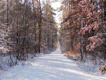 Snöig skogbana med solen som skiner arkivfoton