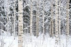 snöig skoglandskap royaltyfri foto