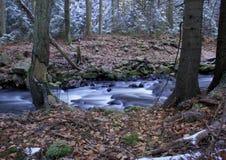 Snöig skogliten vik Royaltyfri Bild