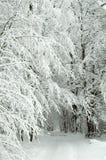 snöig skogväg Arkivbild