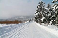 Snöig skogväg - Abant - Bolu - Turkiet Fotografering för Bildbyråer