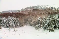 Snöig skogväg - Abant - Bolu - Turkiet Arkivbilder