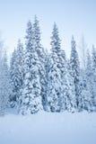 Snöig skogväg med höga träd Fotografering för Bildbyråer